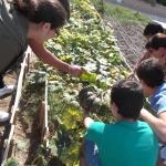"""Huerto ecológico en el Centro de Menores """"Las Lagunillas"""" (Jaén)"""